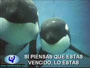 Ballenas Orcas