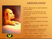 Sabiduría Canina